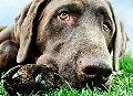 Услуги ветеринарные
