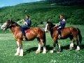 Верховая езда - активный отдых в Крыму