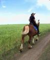 Конные прогулки.Предлагаем индивидуальные и групповые (семейные) прогулки. Для детей есть маленькие лошадки и ослики. Одесская область, Великодолинское, Большая Долина