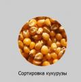Сортировка кукурузы  Производительность: 1т/час*