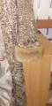 Восстановление, реставрация манжетов рукавов в шубе, полушубке, дубленке. Киев