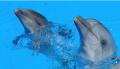 Шоу с черноморскими дельфинами