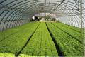 Системы автоматического полива для тепличных и шампиньонных хозяйств