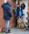 Дрессировка собак на защиту и охрану хозяина Харьков