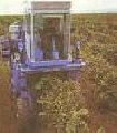 Services in processing of the earth: plowed land, disking, cultivation, crops, interrow processing