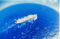 Доставка грузов морская по Украине, международная