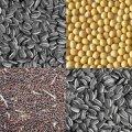 Сушка и очистка масличных и зерновых