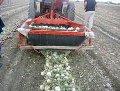 Выращивание овощных культур