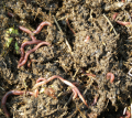 Биогумус - удобрение под газон