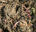 Услуга по удобрению почвы в саду
