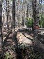 Оперативная вырубка деревьев в Киеве, спил деревьев Киев