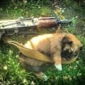 Охрана предприятий с собаками