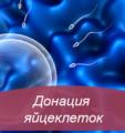 Донация яйцеклеток