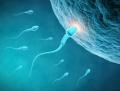 Информационная поддержка по вопросам донации яйцеклеток