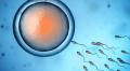 Донор яйцеклеток - партнер клиник репродуктивной медицины