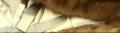 Индивидуальный пошив шубы из соболя