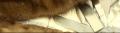 Индивидуальный пошив шубы из шиншиллы