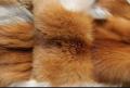 Индивидуальный пошив шубы из меха лисы