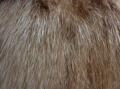 Индивидуальный пошив шубы из нутрии