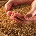 Очищення зернових культур