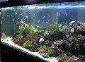 Интерьер в аквариуме.