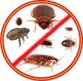 Выведение насекомых Краматорск