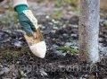Внесение удобрений под растения (диаметр кроны от 1,5 до 2,5 м)
