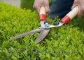 Обрезка кустарников в живой изгороди