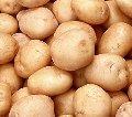 Potatoes cultivation