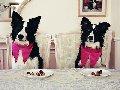 Гостиница для животных  (гостиница для собак)  Донецк