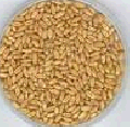 Inspection of grain (quality control, sampling, analyses, pre-shipment inspection)