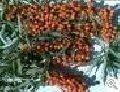 Закупка сырья лекарственных растений: Подорожника большого, Пиона уклоняющегося, Пустырника, Ромашки аптечной, Сенны, Солодки, Толокнянки, Тысячелистника, Чабреца, Череды трехраздельной, Черники.