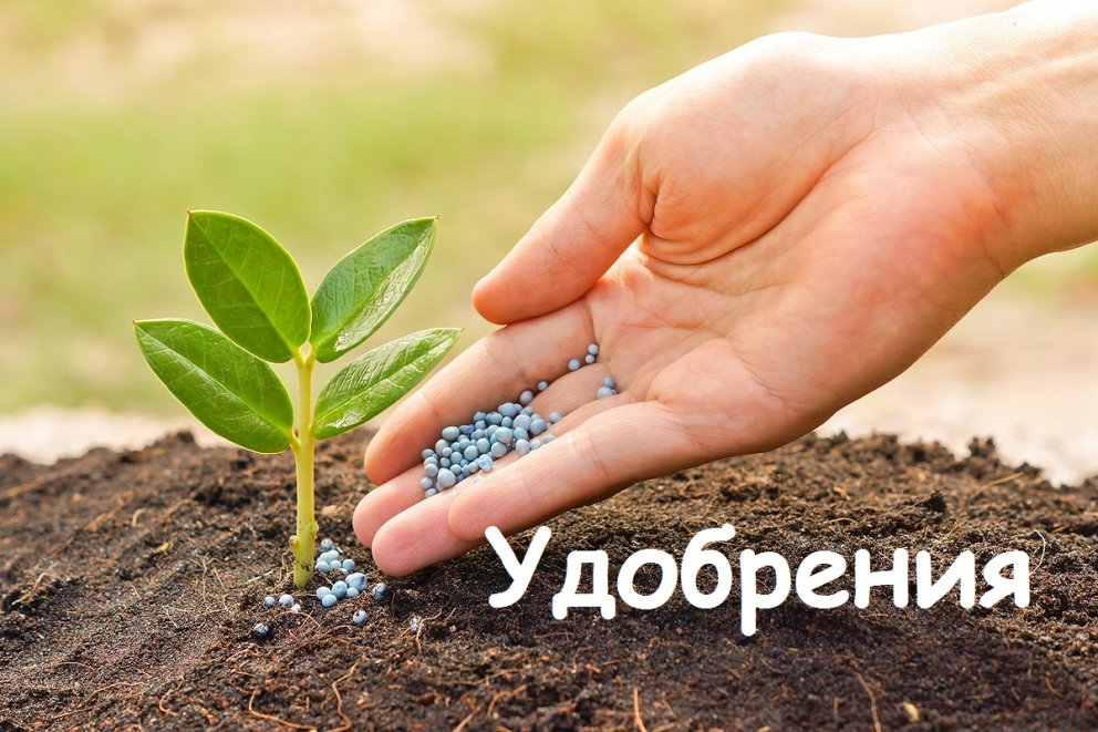 Агрохимцентр,чп